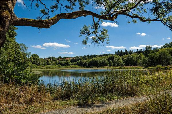 mitten in Clausthal-Zellerfeld ... der Eulenspiegler Teich