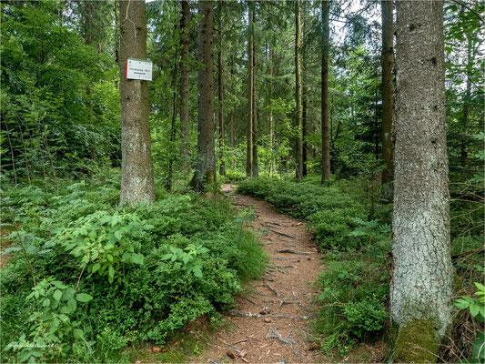 der Waldweg ... zum Innerstesprung beim Entensumpf