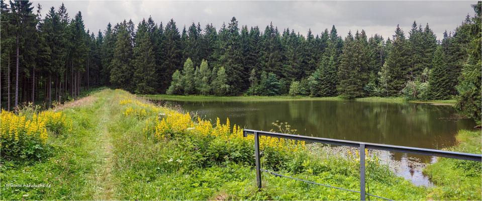 der Than Teich ... bei Hahnenklee-Bockswiese