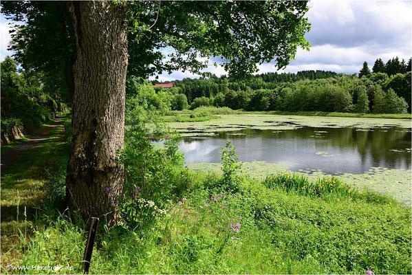 am Eulenspiegler Teich