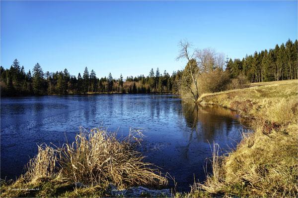 Winter ohne Schnee ... am Hasenbacher Teich