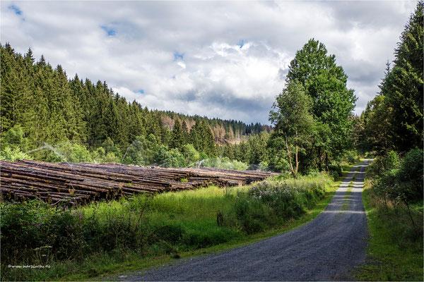 großes Holzlager im Kellerwassertal