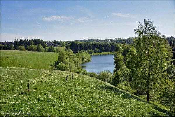 Wiesenblüte am unteren Eschenbacher Teich ...