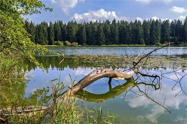 Spiegelung ... am oberen Flambacher Teich