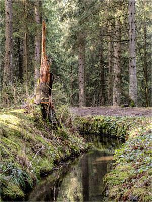 am Dammgraben ... bei Clausthal-Zellerfeld