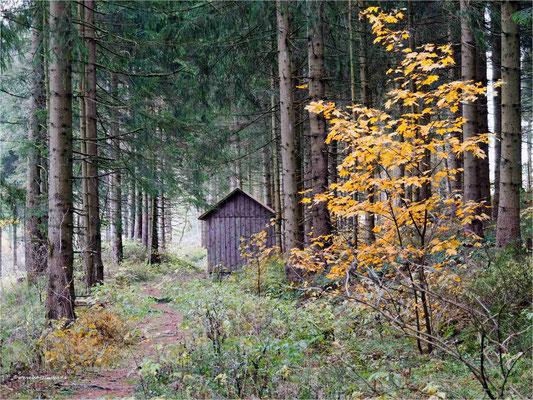 im Harzer Wald ... am Zellerfelder Kunstgraben