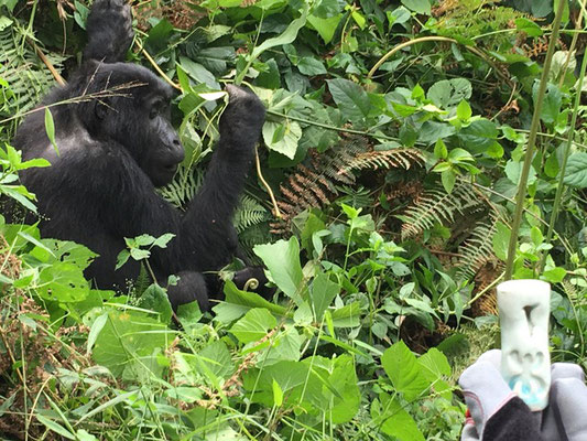 A Rwanda, en compagnie des grands singes...
