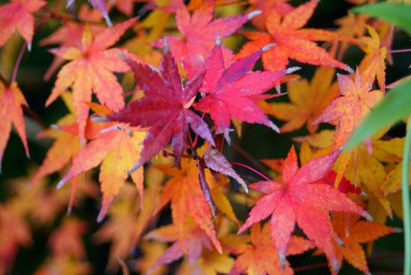 Les couleurs de décembre...