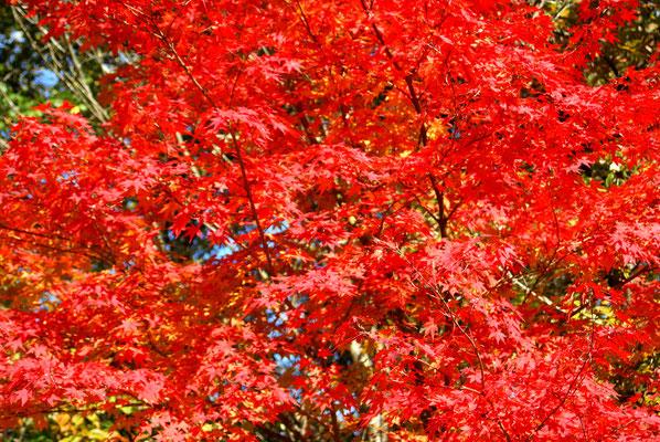Les couleurs de Novembre...