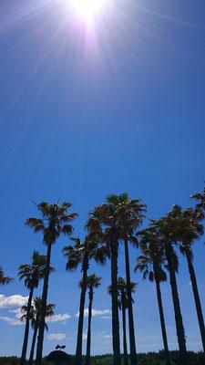 Hawaii?のような?辻堂海浜公園です。
