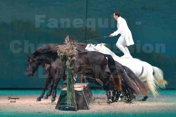 "Cheval Passion 2016 - Spectacle les Crinières d'OR - LORENZO ""Blanc"""