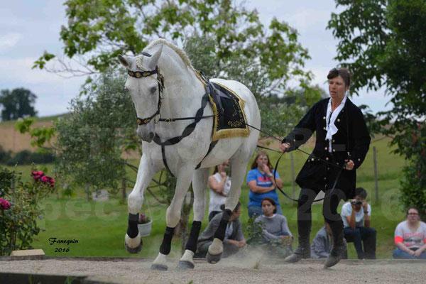 Spectacle de chevaux PRE chez Frédérique VIGNE - 2