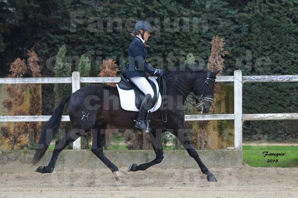 Confirmation de chevaux LUSITANIENS à UZES en Novembre 2018 - GUADALQUIVIR