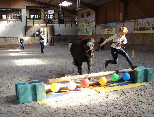 stage poney, equifeel