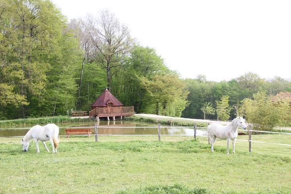 Stage d'équitation pour adultes et familles, séjour au milieu des chevaux
