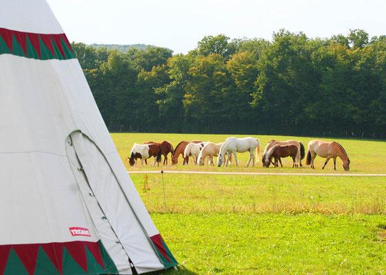 stage d'équitation, tipi et bivouac