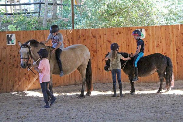 Stage d'équitation, cours de poney