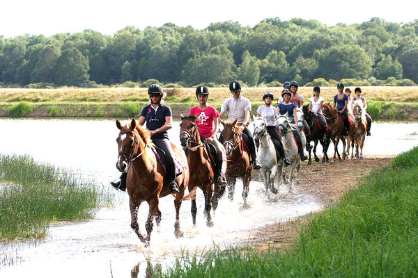 Séjour d'équitation pour adultes et familles