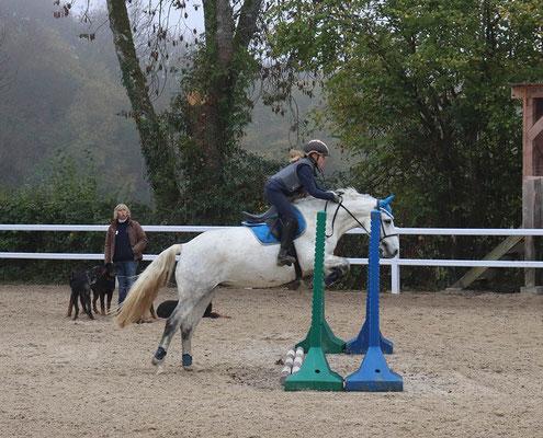 stage d'équitation, saut d'obstacles