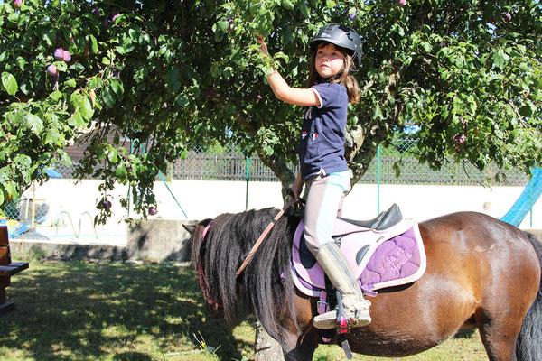 Stage d'équitation, profiter de la nature