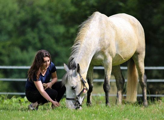 Séjours avec chevaux pour adultes et familles