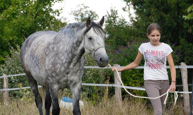 stage d'équitation, aller chercher les poneys au pré