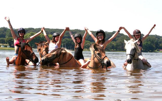 stage d'équitation, les poneys nageurs
