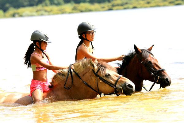Stage d'équitation, baignade au lac avec les poneys
