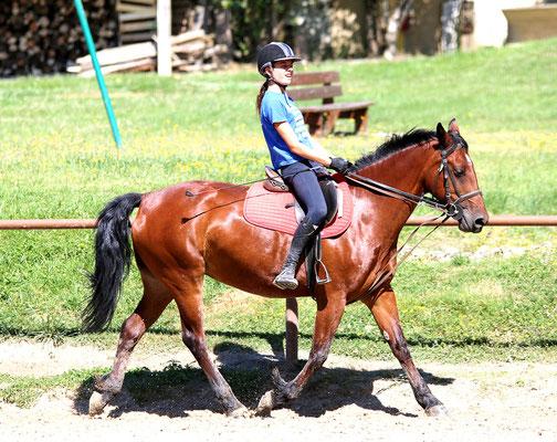 stage d'équitation, reprise de dressage