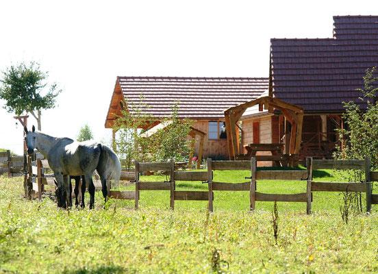 Les chevaux dans les prés attenants au Hameau des Grilles