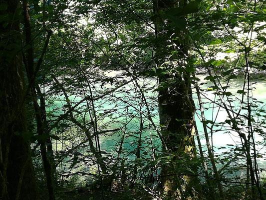 Vue sur le Gave d'Ossau depuis le Bois du Bager, RandoACCOB et Pays d'Art et d'Histoire