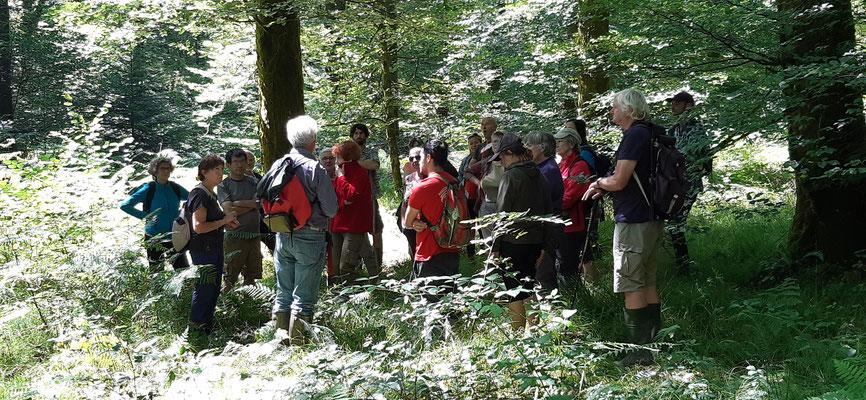 Via le ruisseau de Rachette, la riche biodiversité n'est pas oubliée