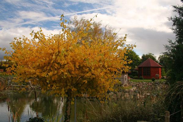 ogniste barwy jesieni