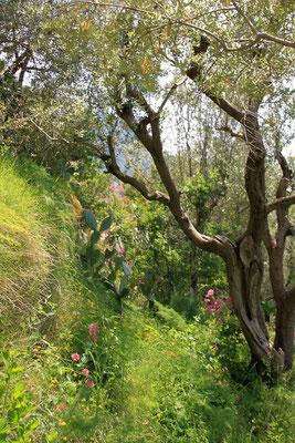 bujna roslinnosc w soczystych barwach zieleni
