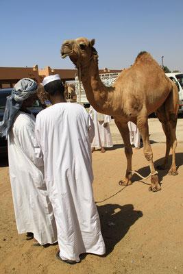 Targ wielbladow w Al Ain