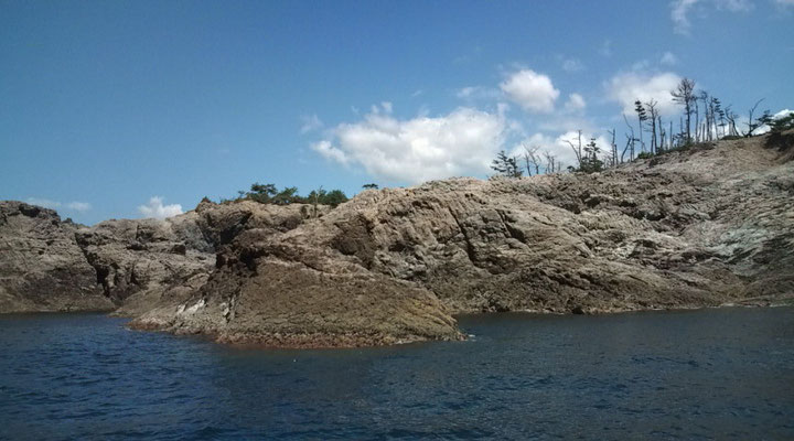 中の真島(鯛、グレ)