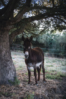 Donkey Puh