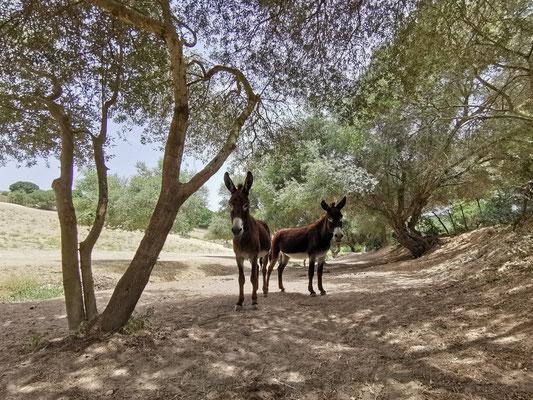 Donkey Puh und Apollo 13 im Offenstall