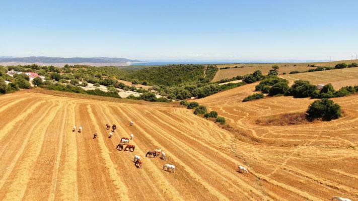 15 Hektar große Sommerkoppel
