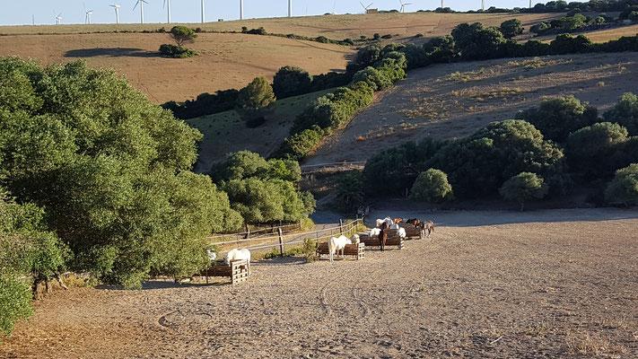 Offenstall 15 Hektar gross
