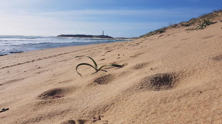 Strand von Los Caños de Meca
