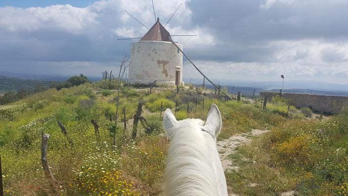 Höhenritt zu den Windmühlen von Vejer