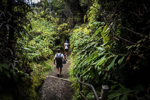 ...wandern wir erstmal durch den Dschungel in Richtung Krater.