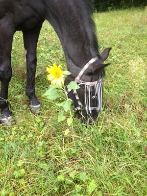 Corde geniesst das Gras