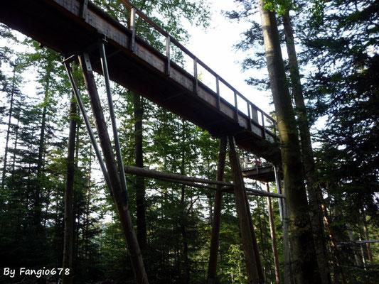 Le sentier dans les arbres