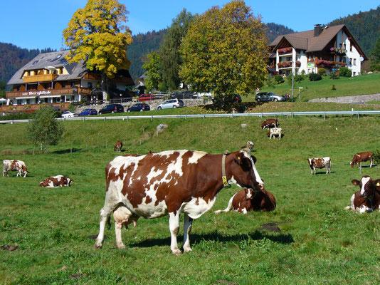 """Landgasthof & Appartements """"Bergblick""""  Genieße die Region  - frisch auf den Tisch"""