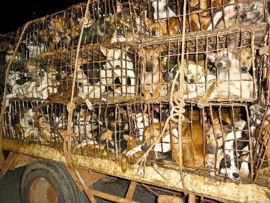 Hundefleisch Thailand