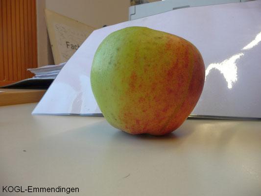 Horneburger Pfannenkuchenapfel