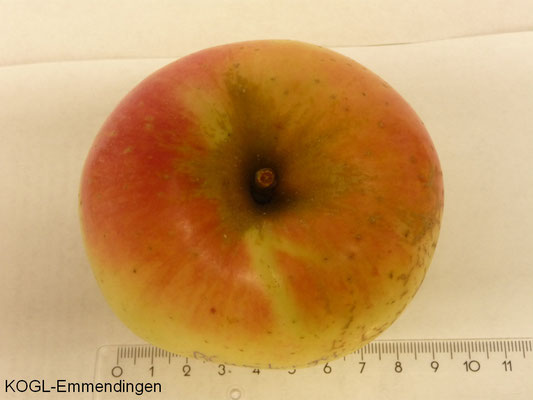 Blumberger Langstiel Apfel