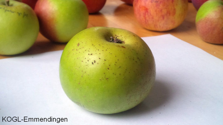 Maicher Apfel
